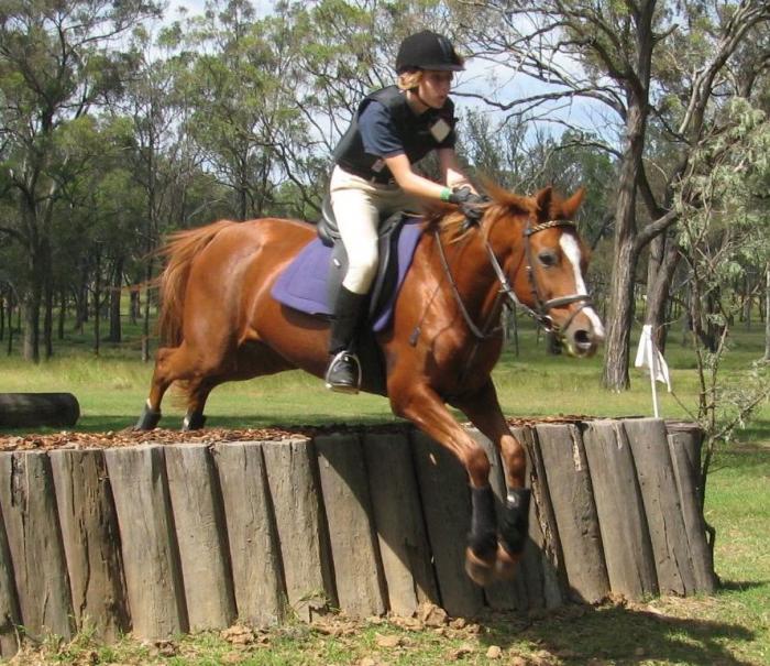 Quiet, experienced pony club mount - 100% sound