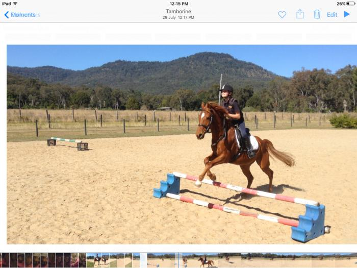 13.3 hh Competitive Pony