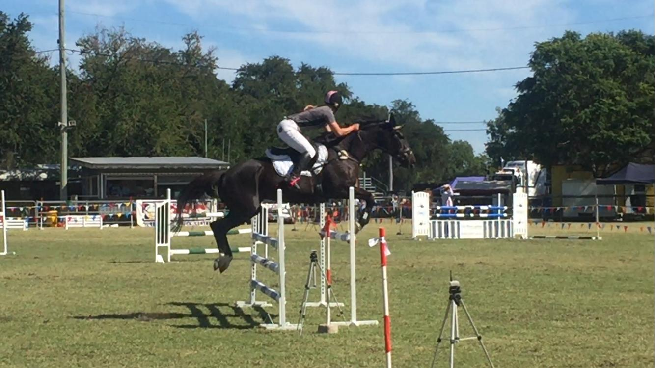 Rums the deal - showjumper