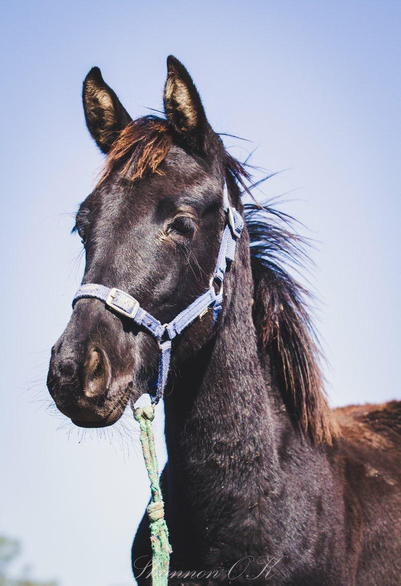 Weanling filly