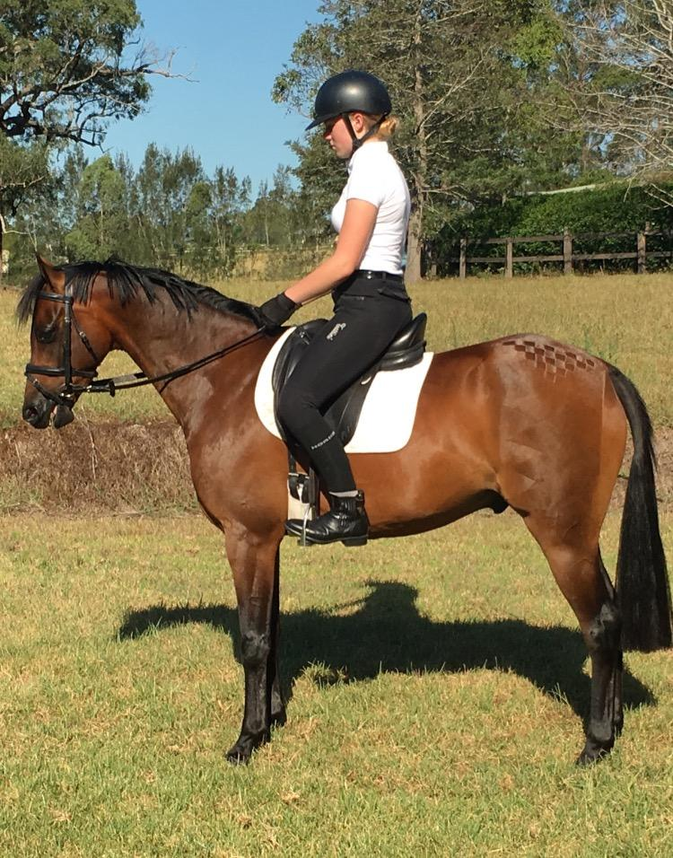 Pretty Riding Pony with Potential  - Price Reduced