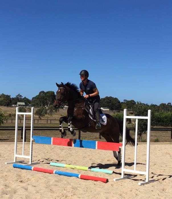 Athletic Stock horse gelding