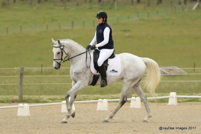 Eye-catching Competitive Dressage Gelding