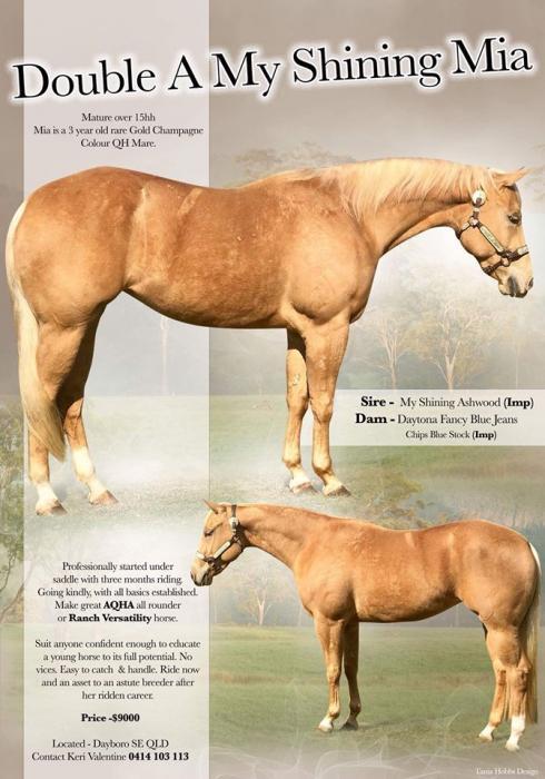 Beautiful Gold Champagne Quarter Horse