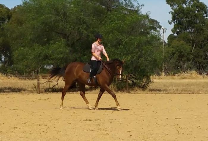 Superb Young Gelding ready for the next step!