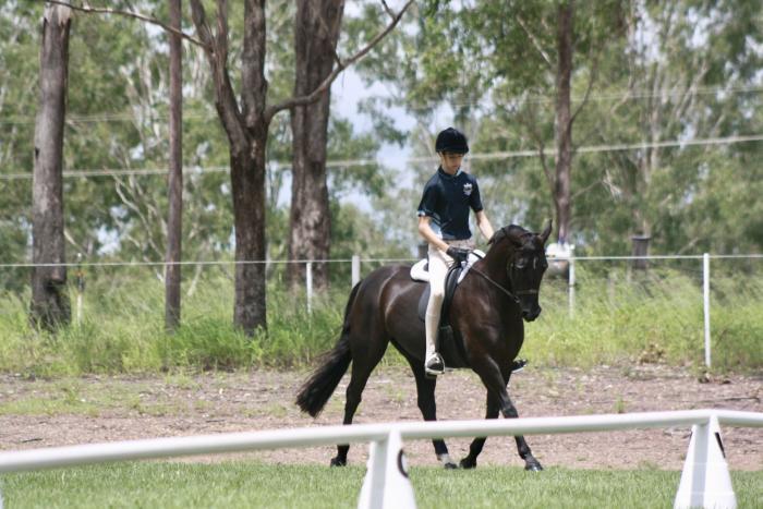 Stunning allrounder galloway mare, tick every box!
