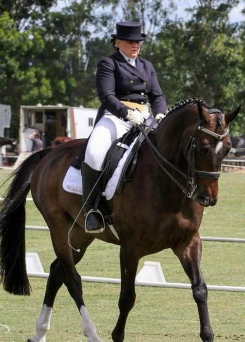 IMPRESSIVE PSG DRESSAGE HORSE
