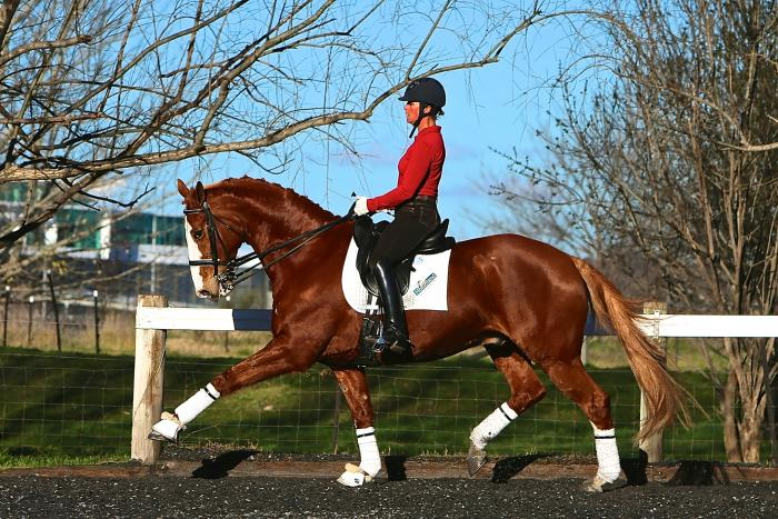 Highly Competitive & Proven FEI Gentleman