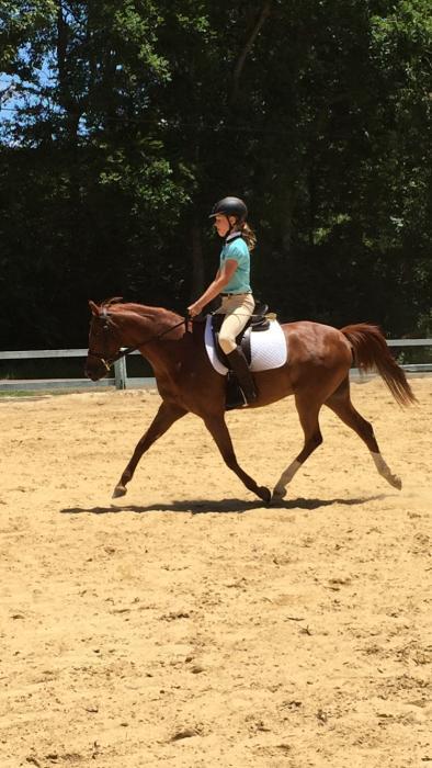 Talented dressage / show pony