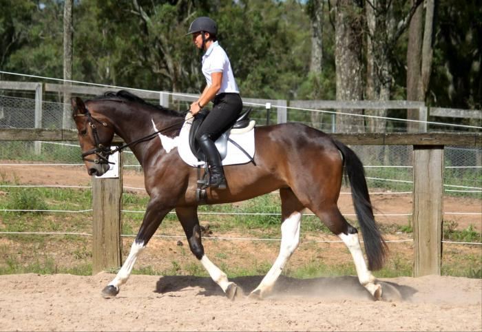 ***Athletic Paint Mare: X-Mas Special***