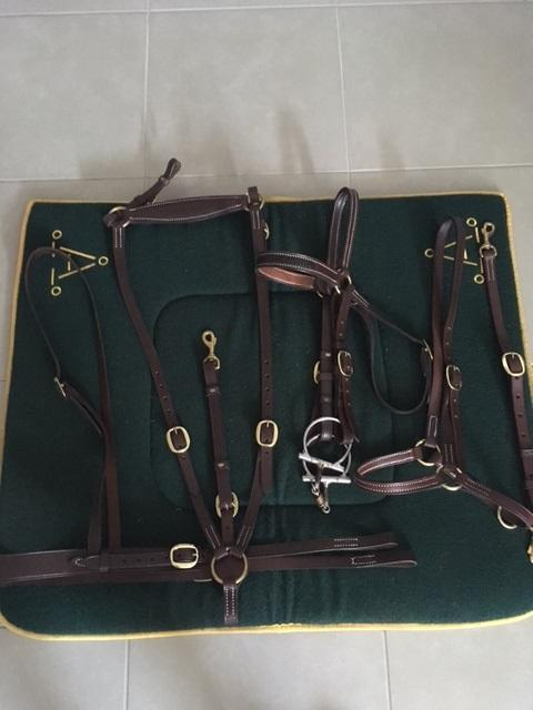 Polocrosse/Stock Gear