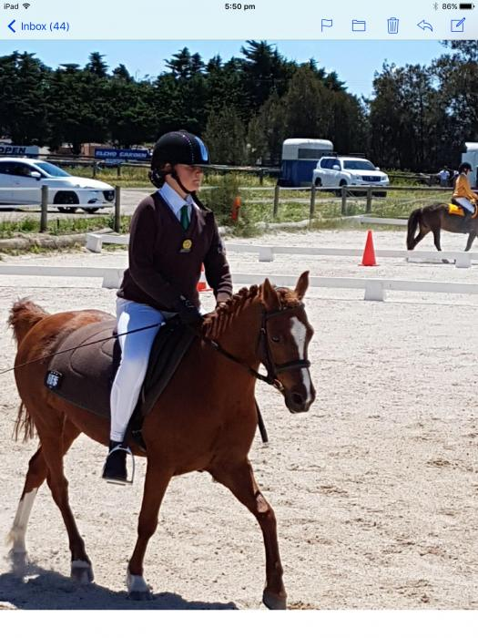 Gorgeous performance pony