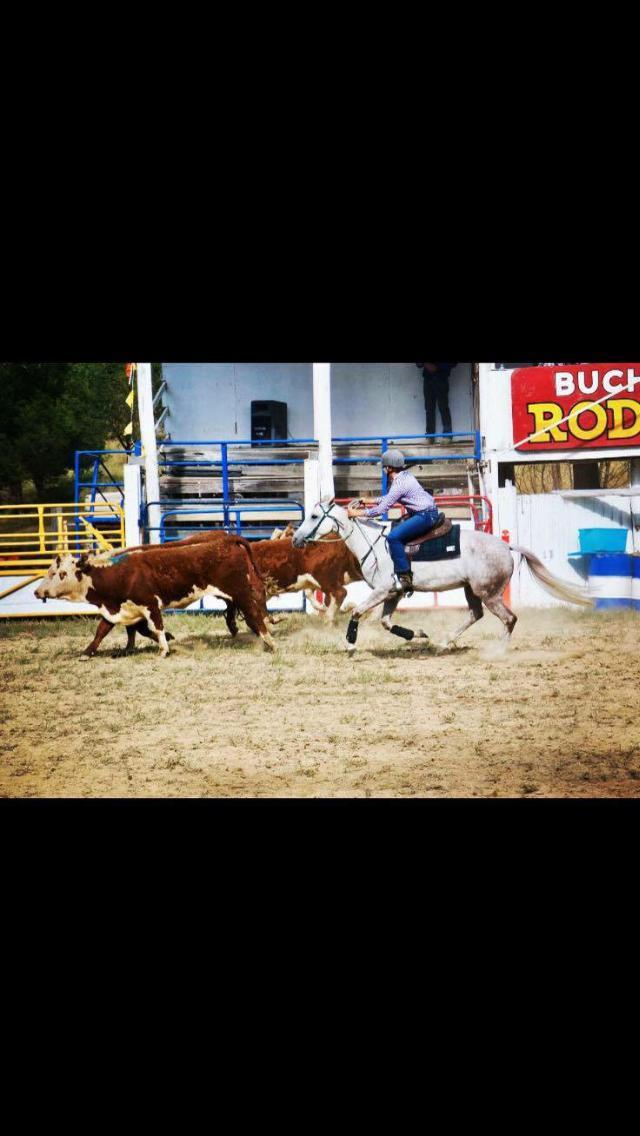 Challenge Stockhorse Allrounder