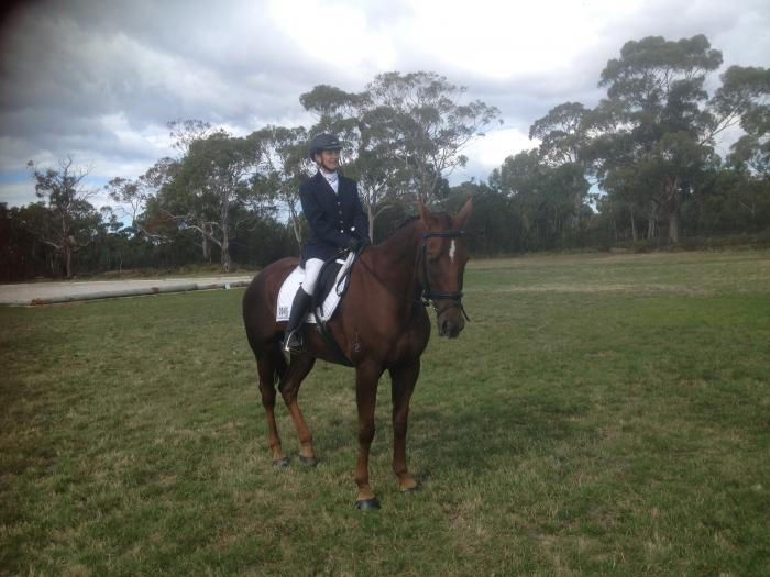 Stockhorse gelding with experience