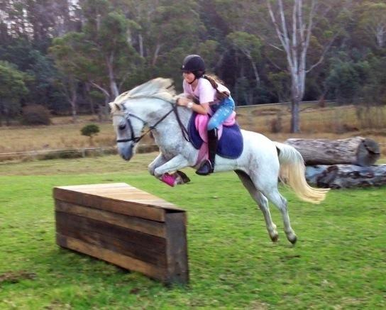 Competitive All-round 13hh Gelding
