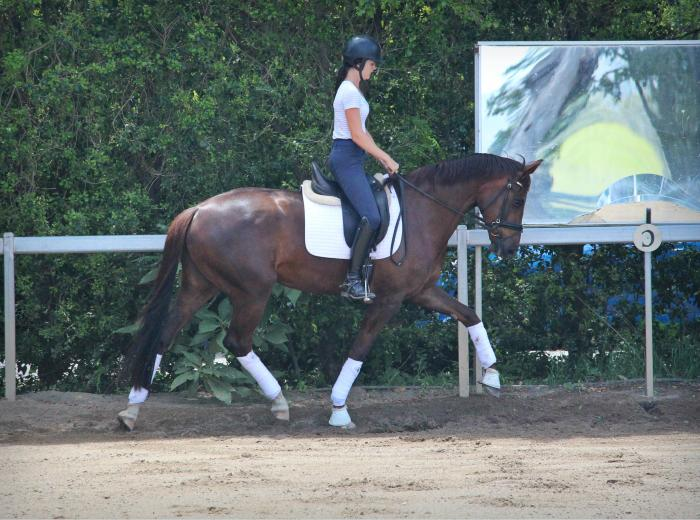 Fancy 4yo JazzxSir Donnerhall mare!