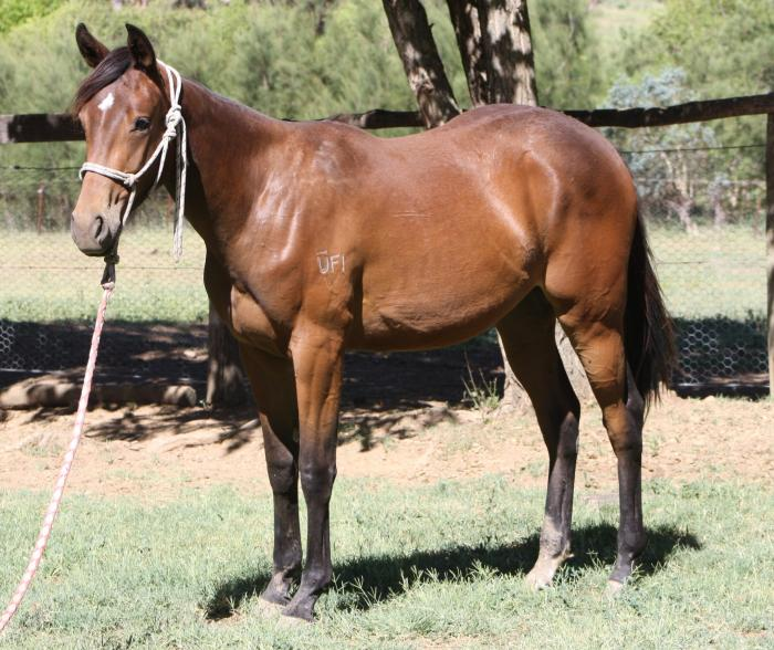 Blue Moon Mystic grand daughter- price reduced