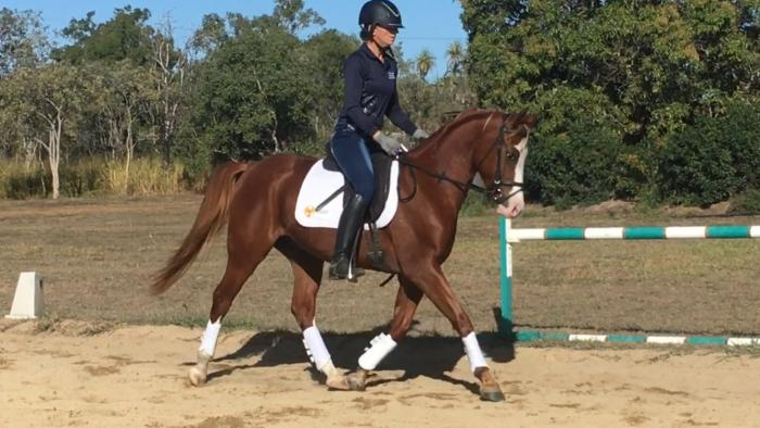 NEW VIDEO:Stunning Arabian x gelding