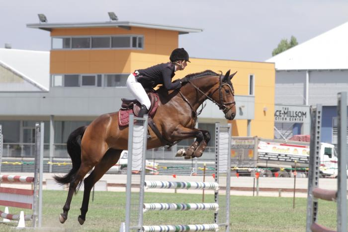 Exciting 6yo mare by Check In