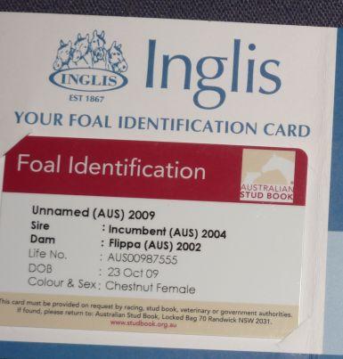 Foal Identification