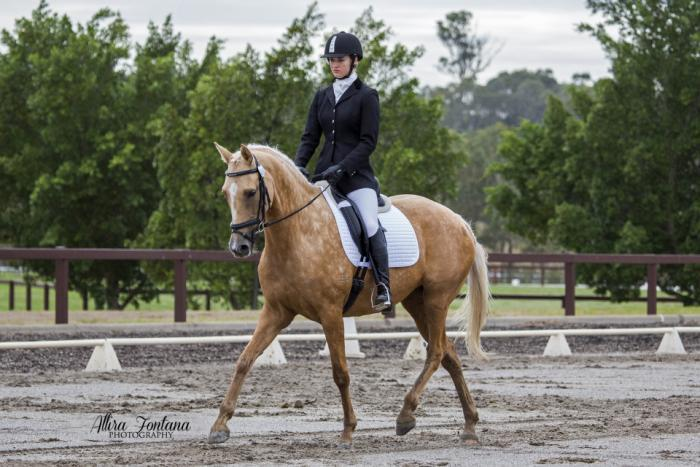Very pretty well performed mare, PC/SJ/eventer
