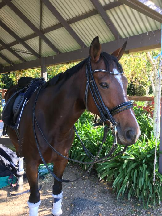 Rolled Flexible Fit Double Bridle