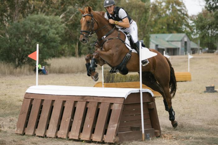 Fun Eventing or Showjumping Prospect.