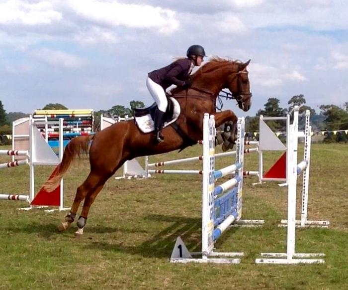 Honest & Reliable Showjumper *PRICE REDUCED*