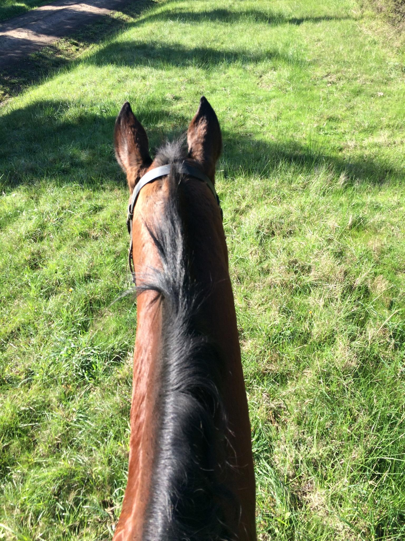 Experienced Dressage or Trail Riding