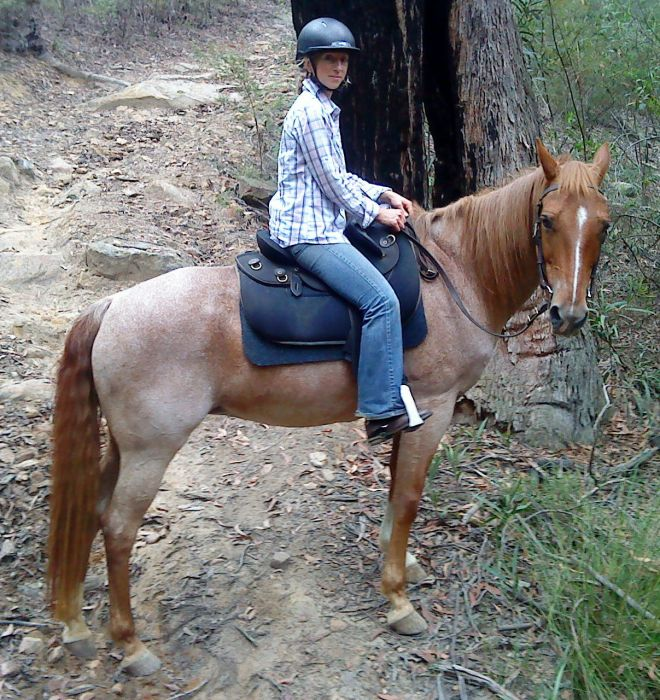 THE ULTIMATE TRAIL HORSE