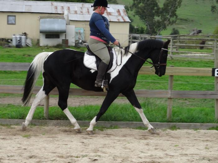 15.2hh 13 year old Stunning All Rounder Gelding
