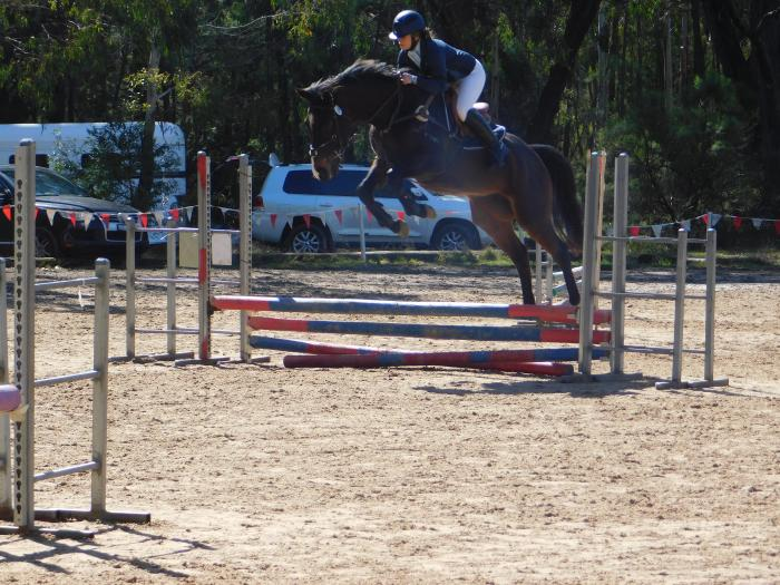 Perfect Pony Club Mount