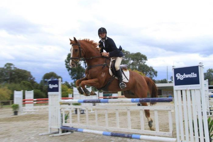 PRICE REDUCED!!  Super Showjumper!!