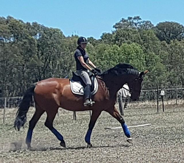 Talented All-rounder confidence builder Warmblood