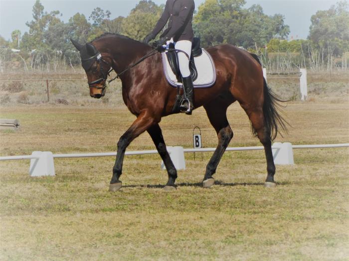 EA Horse Trials winner