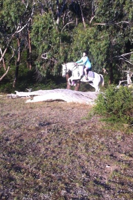Ripper Pony Club Mount 13.3 h