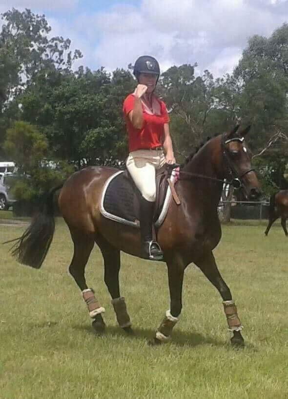Riding Pony in foal to German Riding Pony