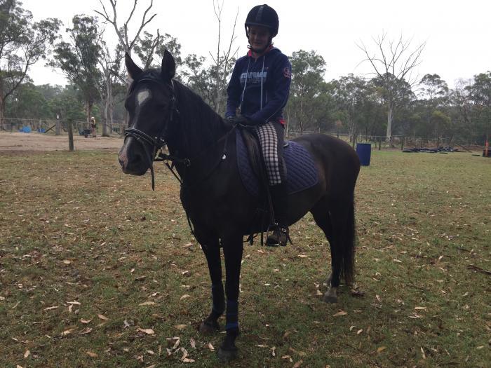 Pony Club or Trail ride Pony