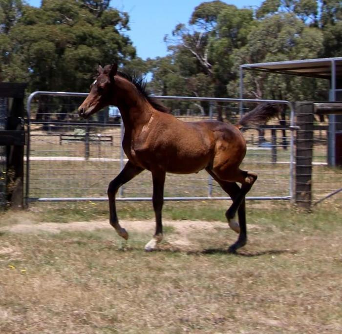 Purebred colt by Spades LRA