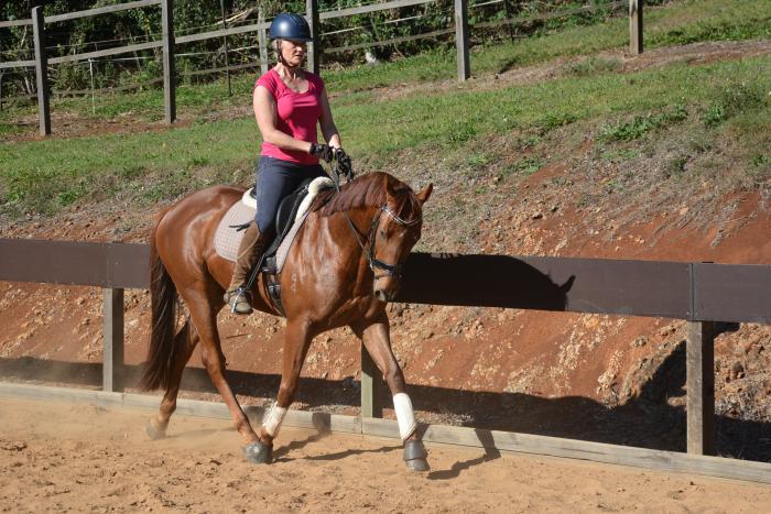 Royal Show Quality Hunter Gelding /Dressage horse