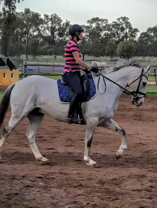 Quality dressage horse available