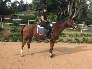 Quarter Horse X