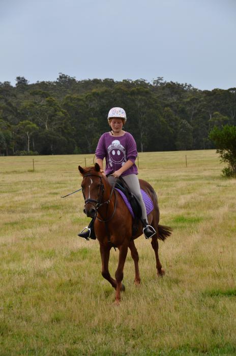 Pony club pony for confident rider