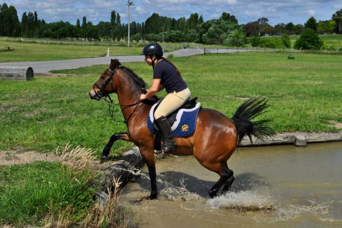 Pony Club & Mounted Games safe & fun gelding.