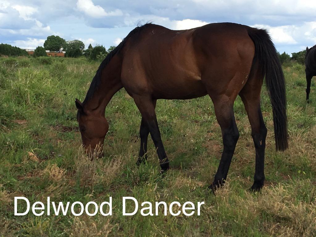 Dellwood Dancer