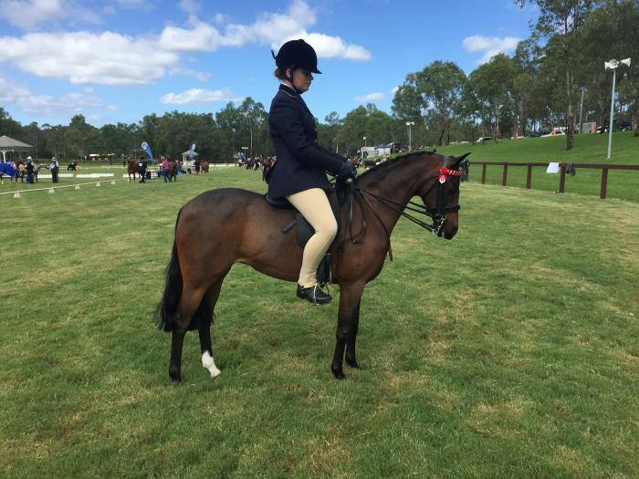 Beautiful Sanlirra pony for sale