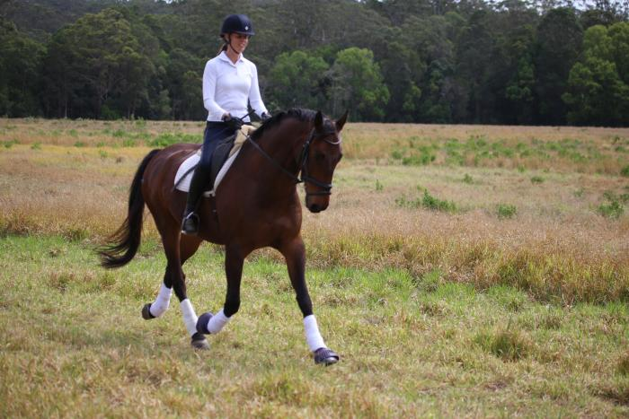 Educated, quiet and versatile gelding