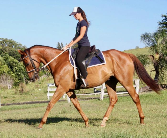 Beautiful Chestnut Gelding!! Must Sell!