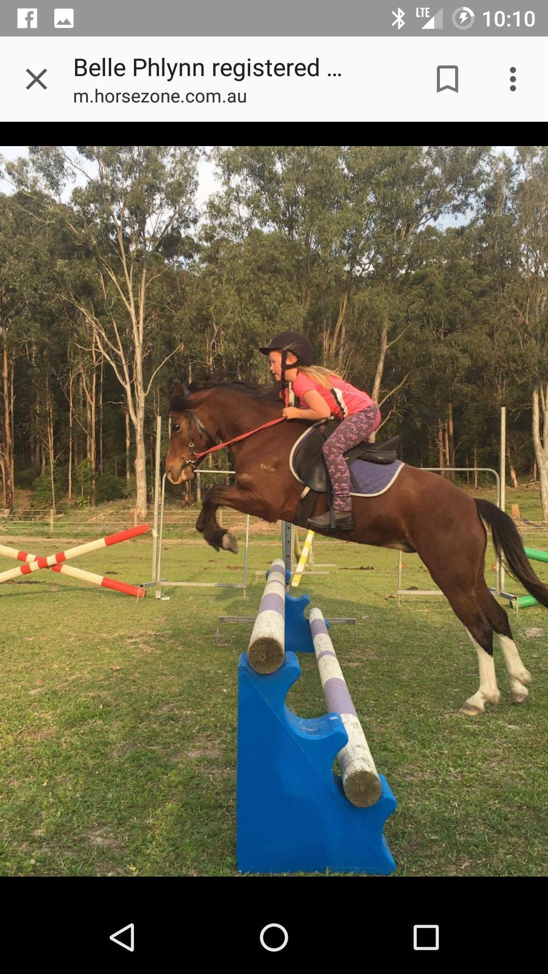 Belle Phlynn Welsh pony