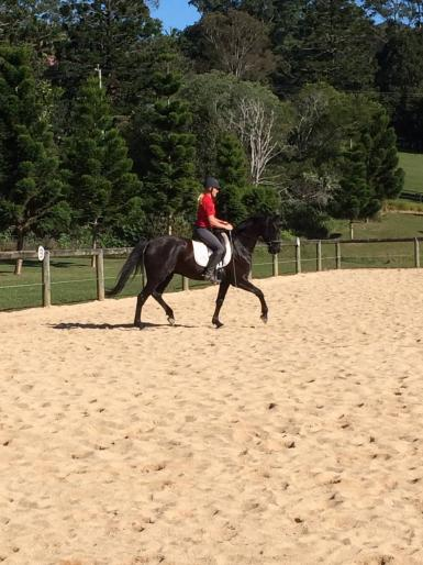 Lloyd's 1st time out at Petsch Creek Sand Arena